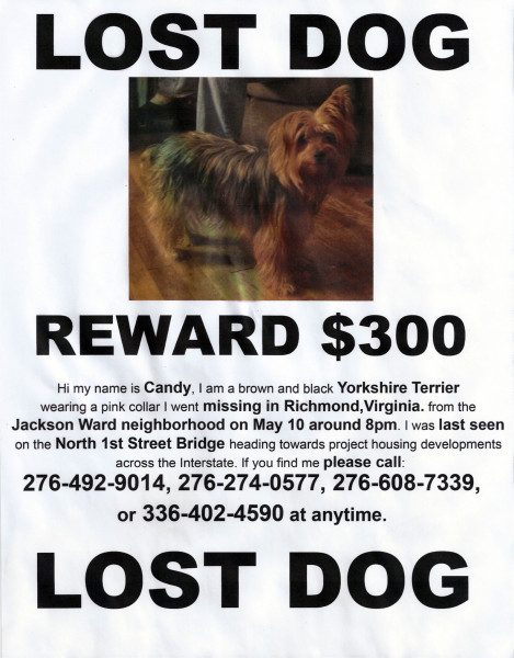 Information about Candy, a lost dog