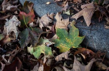 GMRVA-2014.10.17-Leaves