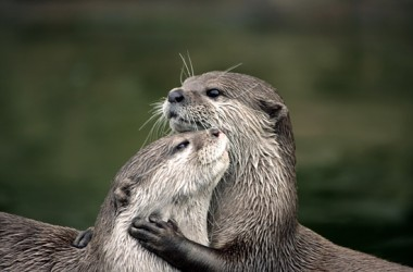 Otters-2014.10.03