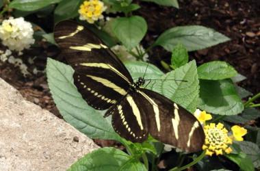 Butterflies--2015.04.17