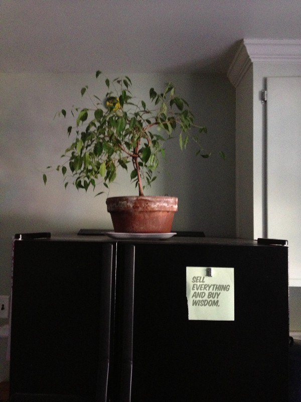 This is Rickey's bonsai tree. He had been loving on this thing since I've known him. It started as a cutting from a much larger tree that he let go a few years ago. He is a nurturer of life. It lives here, above the fridge.