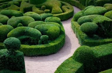 Topiary--2015.05.11