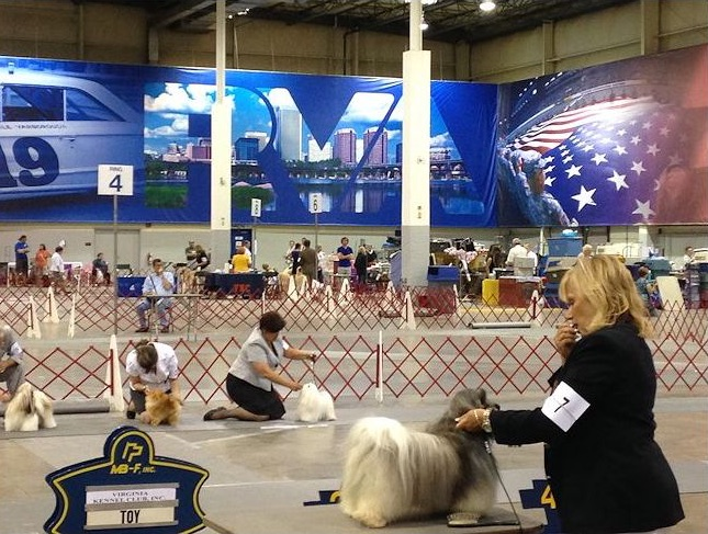 Dogs competing in the 2014 show.